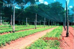 La malla de sombreado se utiliza para proveer de sombra a cultivos más delicados a los rayos uv del sol.